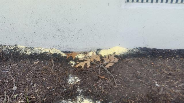 DIY solution made ant problem worse - Ant control and removal services in B...