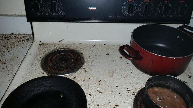 Severe cockroach infestation in Monmouth Junction apartment complex apartme...