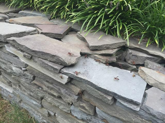 Wasps try to hide in rock wall - Wasp removal & control in Kendall Park, NJ