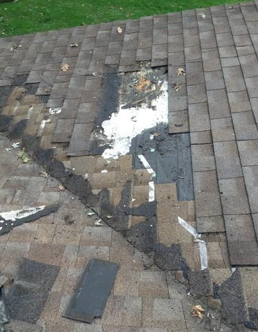 Joliet, IL Animal Damage Roof Repair