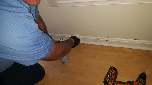 Termites invade Princeton, NJ home