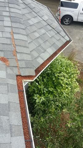 Home Gutters on Lummi Bay in Bellingham, WA has a needle and pod problem