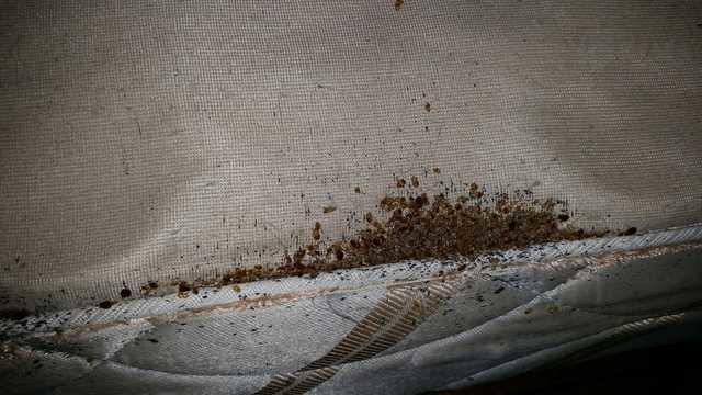 Pests We Treat Super Bad Bed Bug Infestation In Forked River Nj