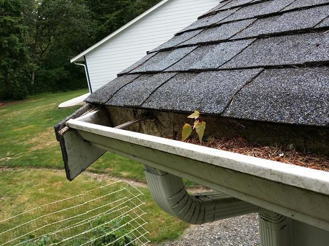 Weeds Growing in a Rochester, WA Home's Gutters