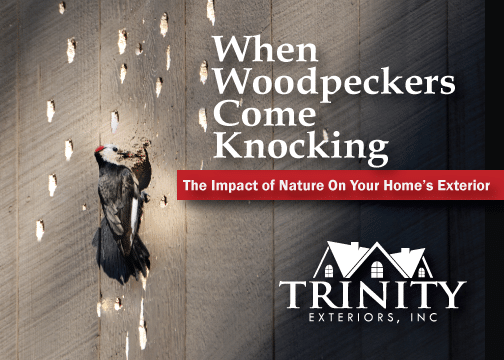 When Woodpeckers Become a Problem