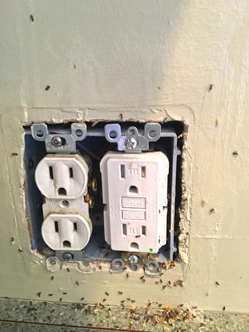 Odorous House Ants Nest in Kitchen Outlet in Toms River, NJ