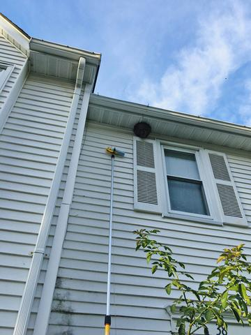 Bald-Faced Hornets Nest Hangs High in Jackson, NJ