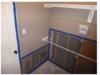 Sachse Texas Mold Remediation Job