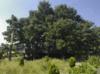 Tulsa Botanic Garden Tree Fort