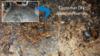Citronella ants invade Princeton, NJ crawl space - Photo 1