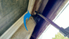 Mice find easy access through basement window - Mouse removal in Piscataway, NJ - Photo 1
