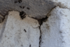 Ants Trail Up Commercial Building in Barnegat, NJ - Photo 1
