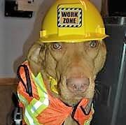 Paw'fficer Ruger from Adirondack Basement Systems