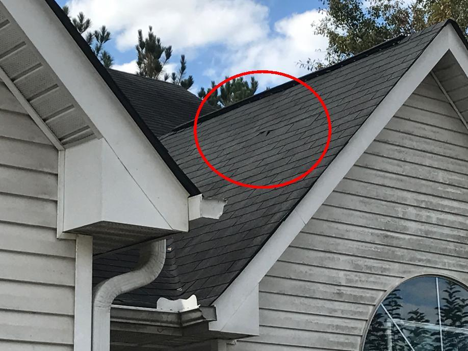 Visible Shingle Damage