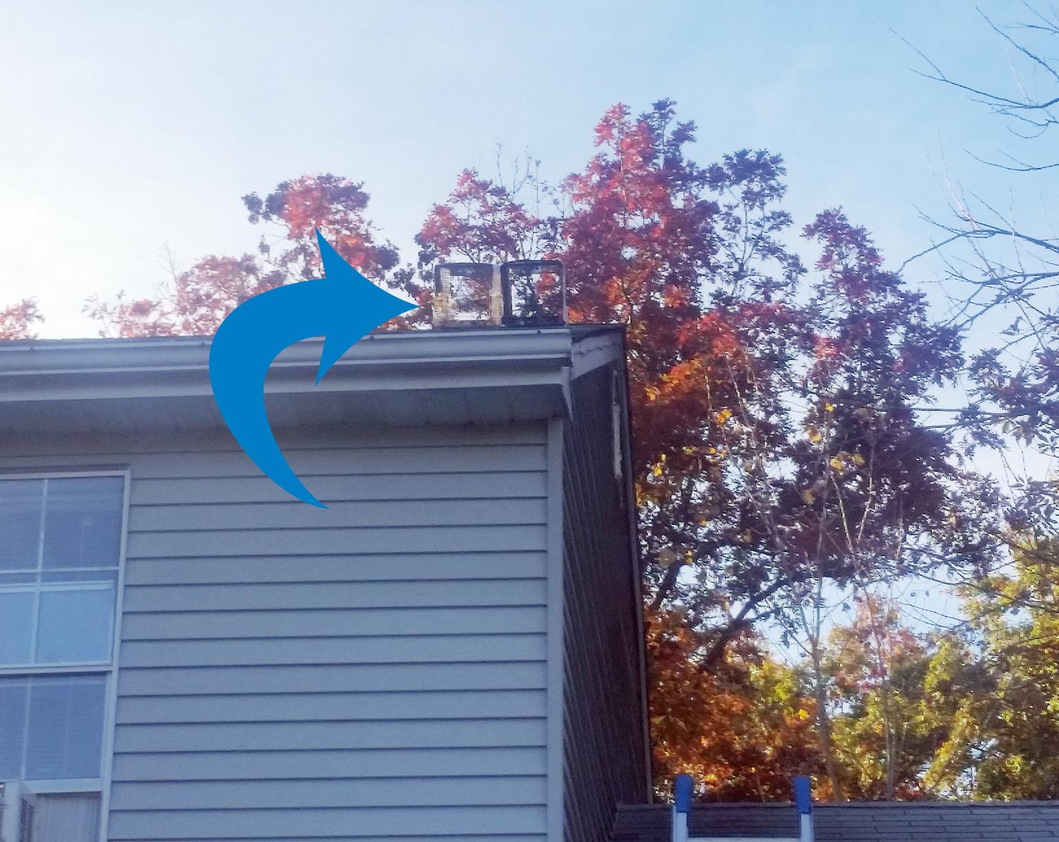 Traps set on roof for Raccoons in Belford