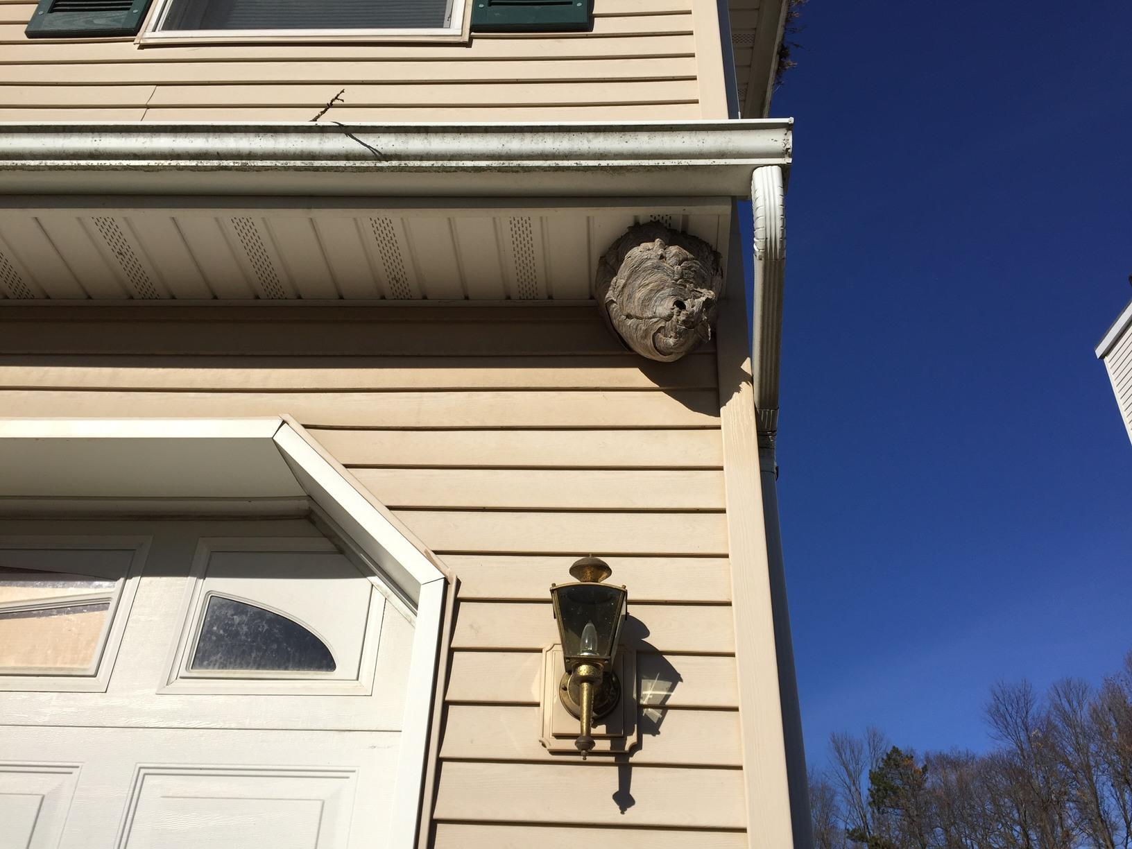Hornets nest close up in Fords, New Jersey