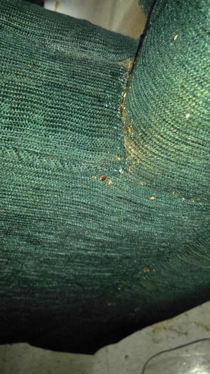 Bed bugs on recliner in Barnegat, New Jersey