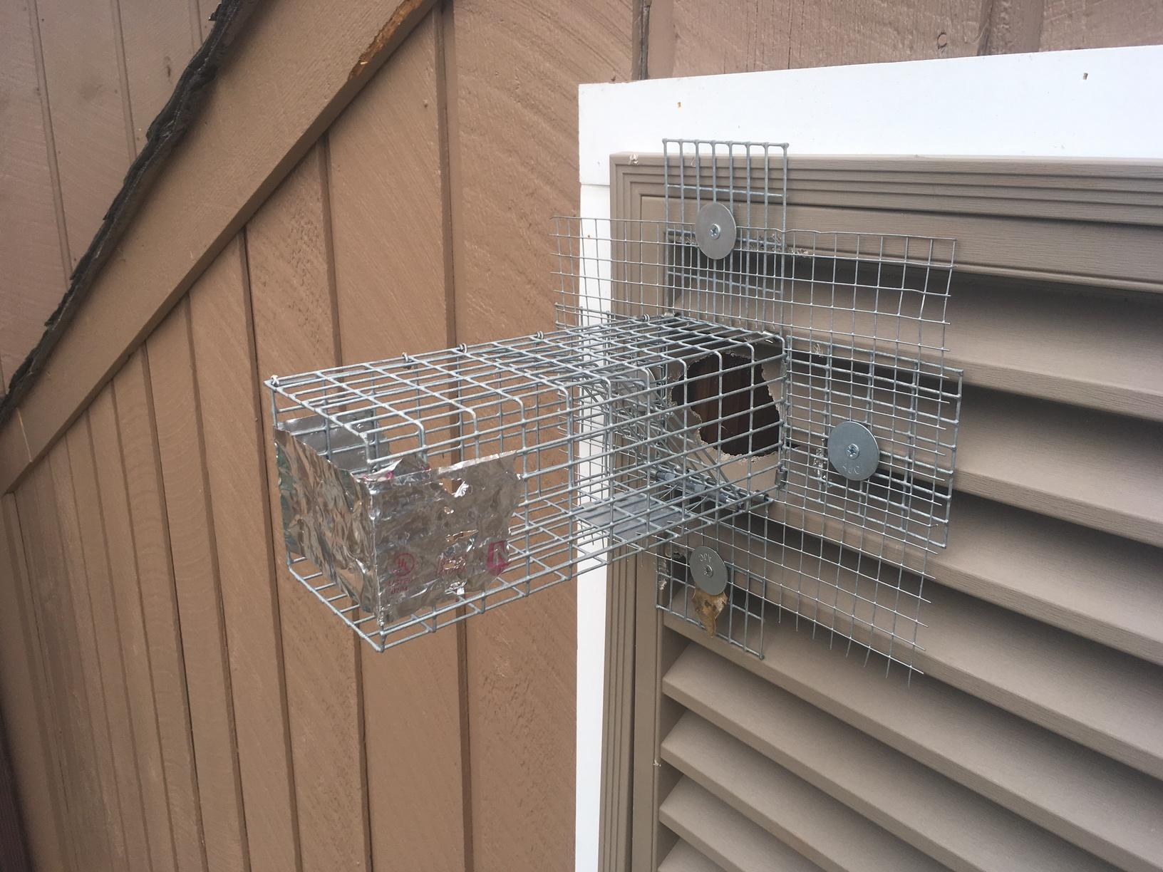 One-way trap for squirrels in Imlaystown, NJ
