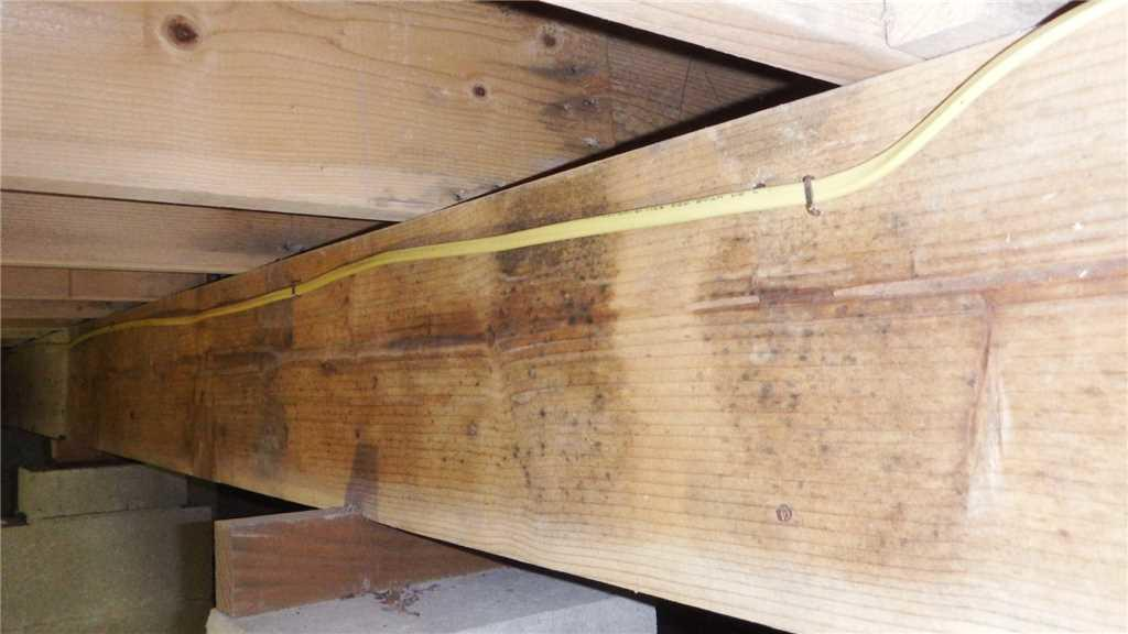 Mold Growth on Organic Materials
