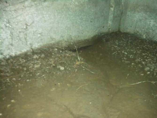 Moldy Crawls Space in Fremont, CA