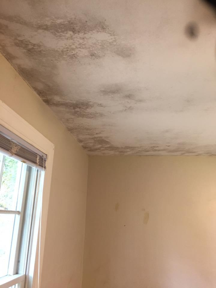 Before remediaiton of mold