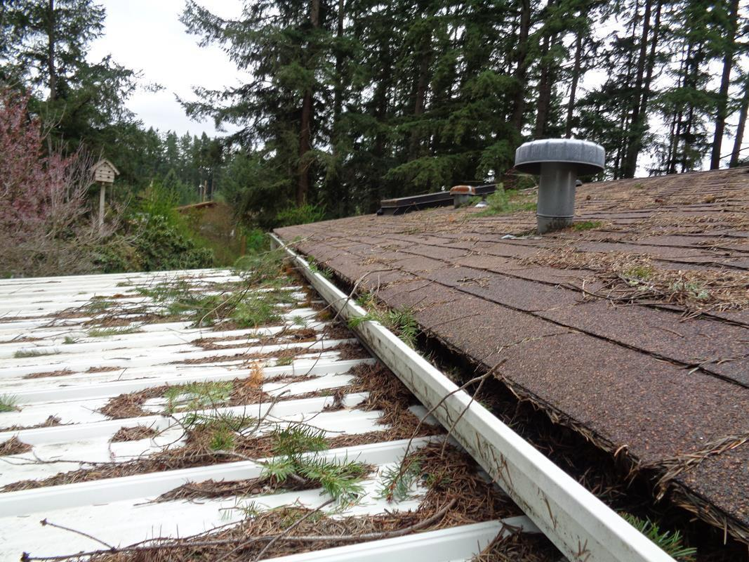 Gutters full of pine needles and debris in Spanaway, WA