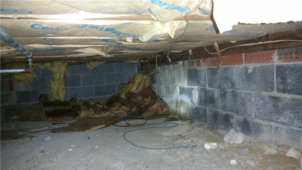 Dirty, Mold Crawl Space