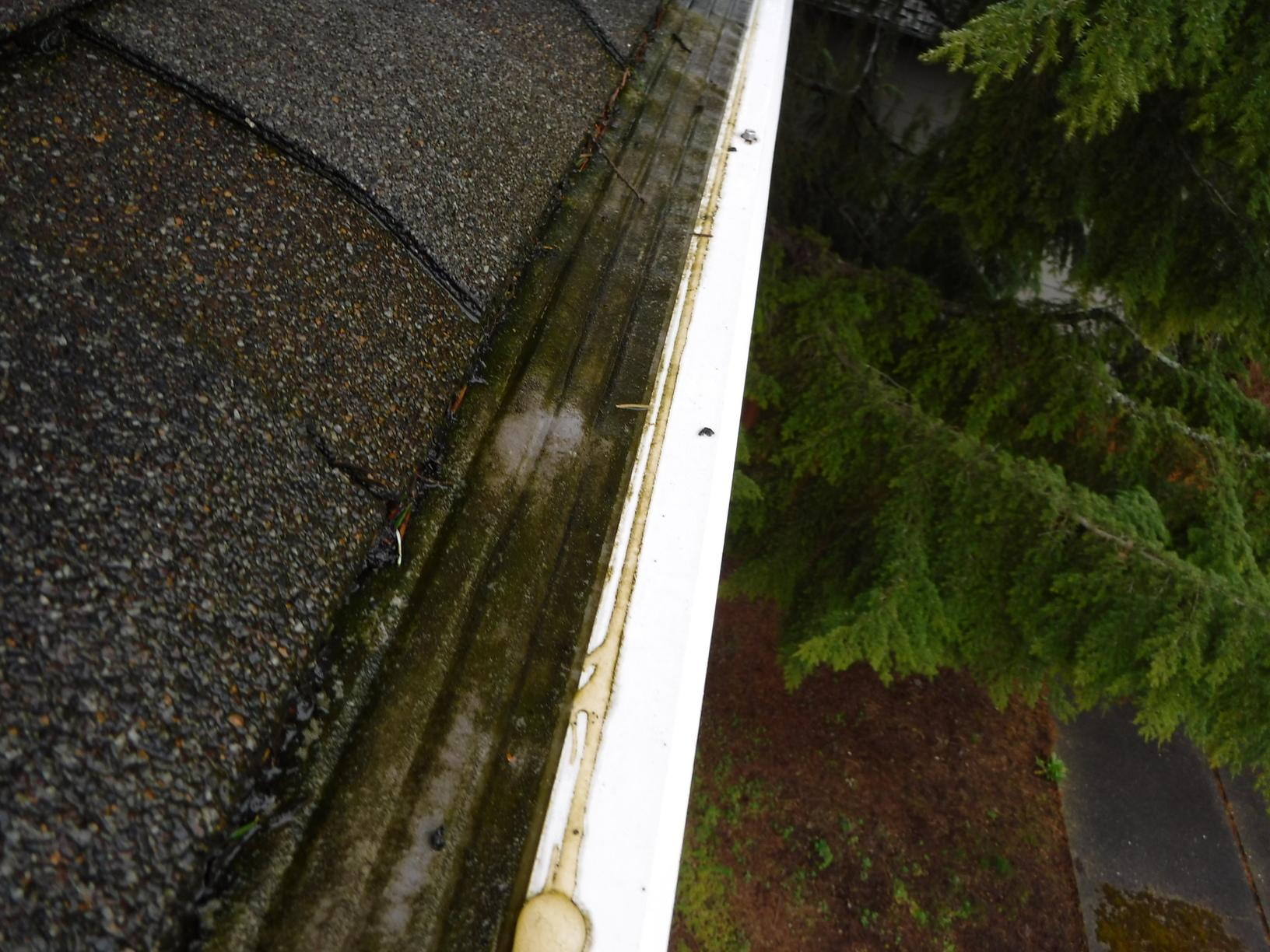 Clogged Gutters in Mount Vernon, Washington
