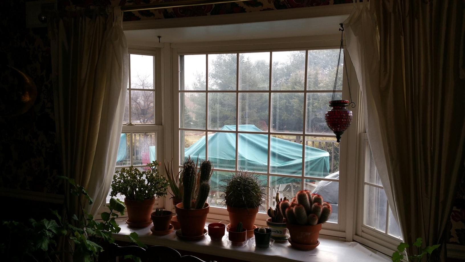 Wood Windows that Need Replacement