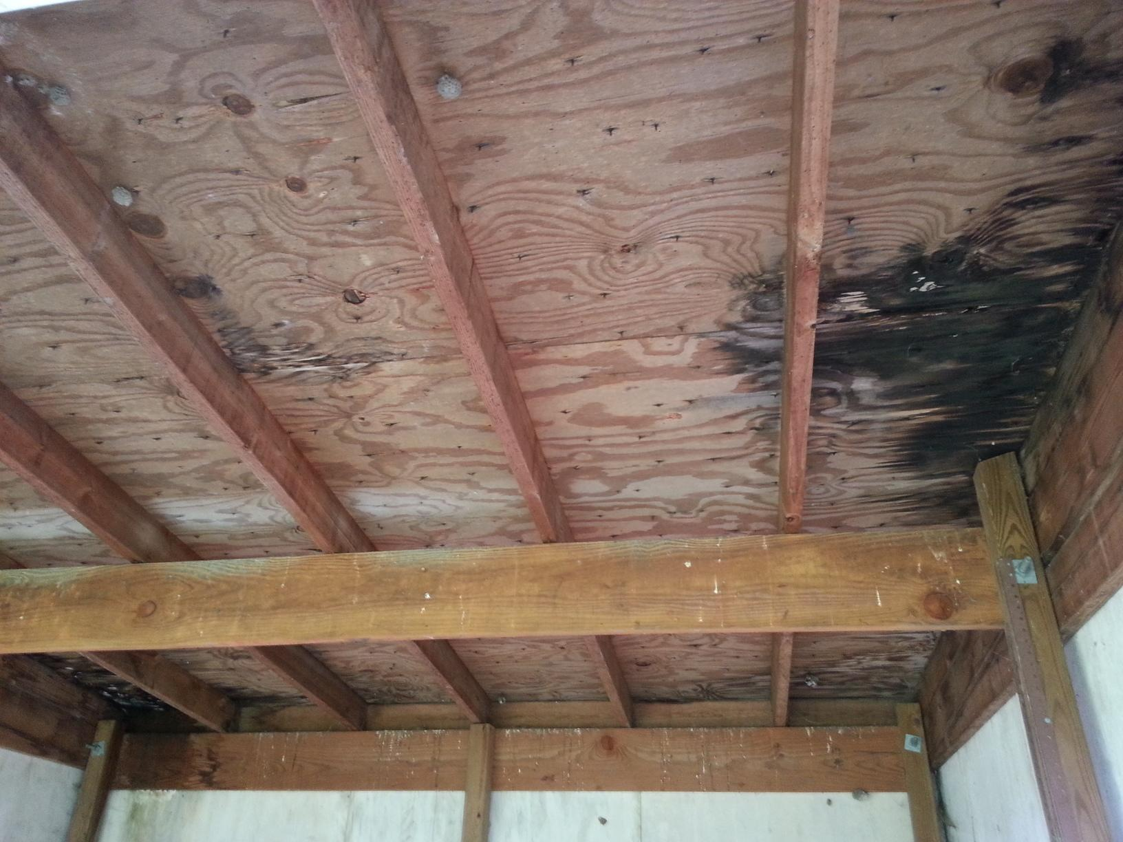 Water Damage from Asphalt Shingle Roof