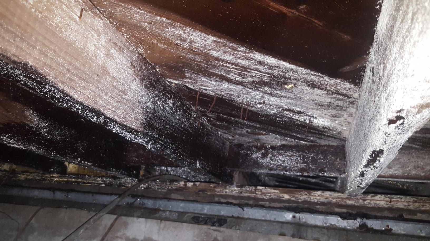 Moldy Crawl Space The Colony TX