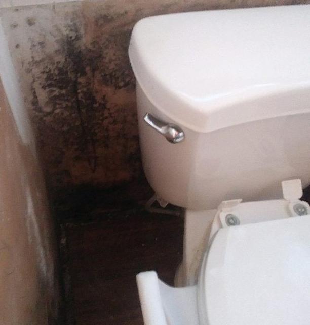 Mold in Bathroom Royse City, TX