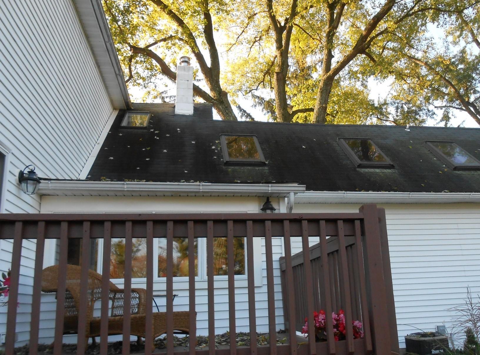 Algae Growth Around Skylights of Asphalt Roof
