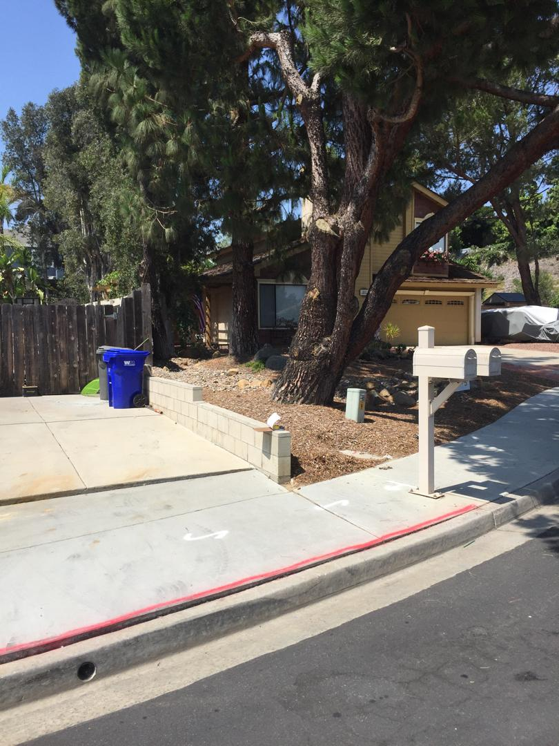 Quoting Tree Root Removal and Concrete Replacement in Oceanside