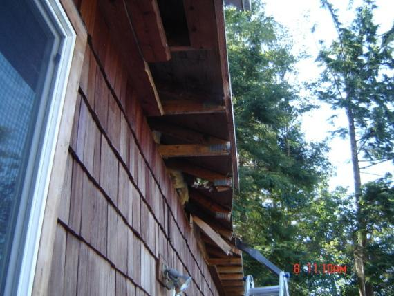 Tree Damaged Roof Repair in Astoria, OR