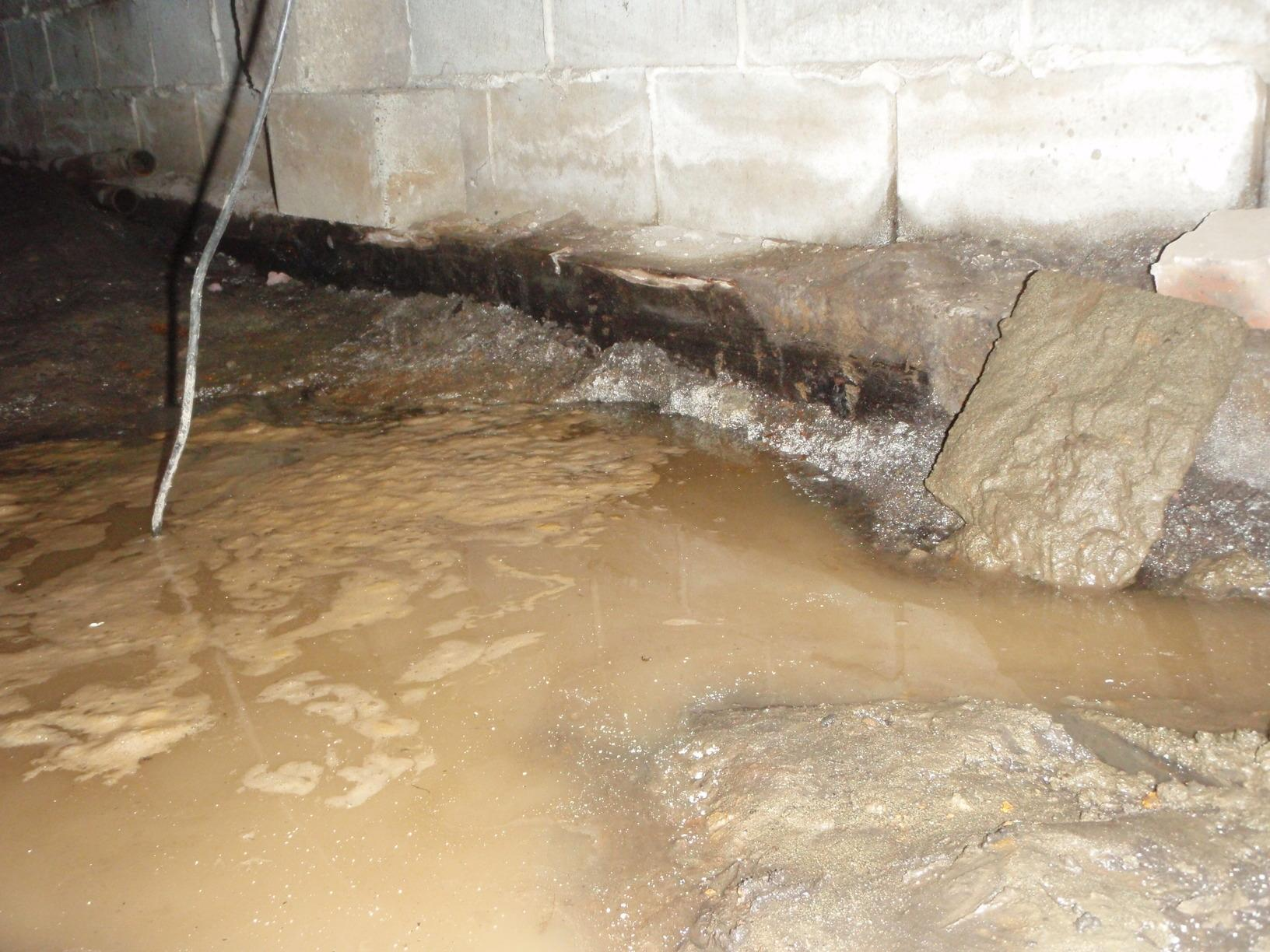 These home owner's were shocked to see what was going on in their crawl space