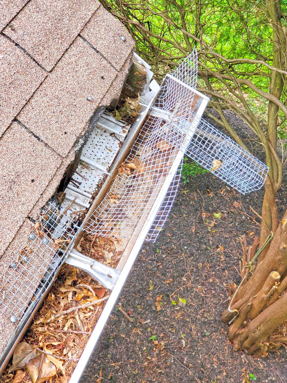 Cowleys Pest Services Wildlife Removal Photo Album