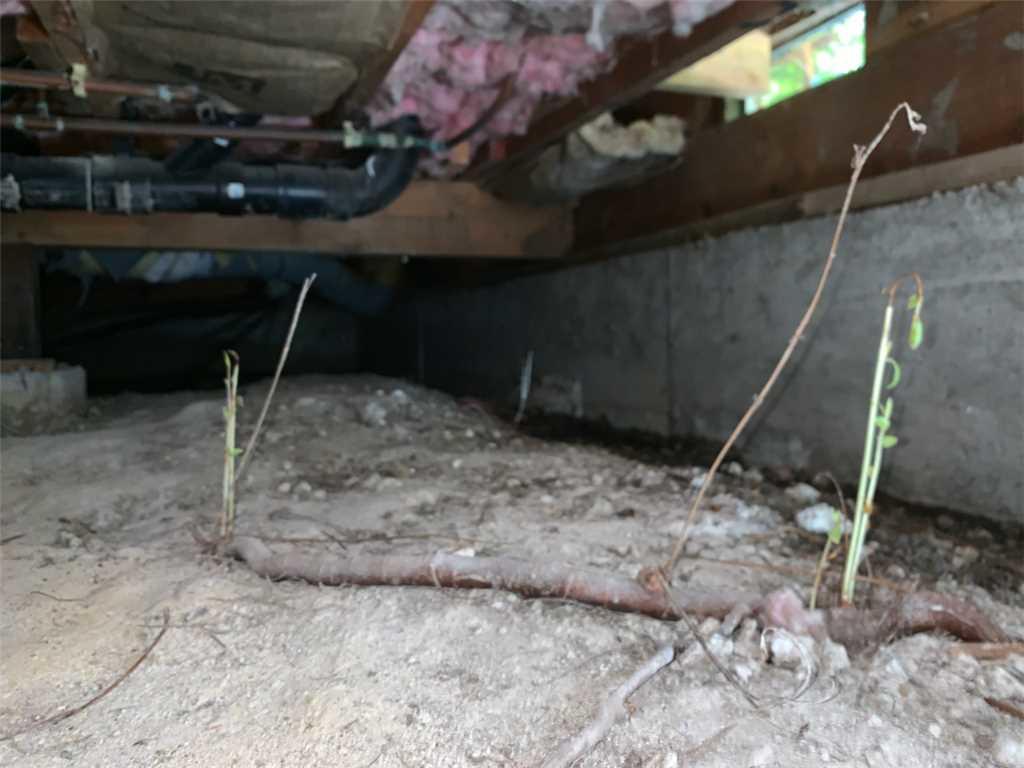 Encapsulated Crawlspace