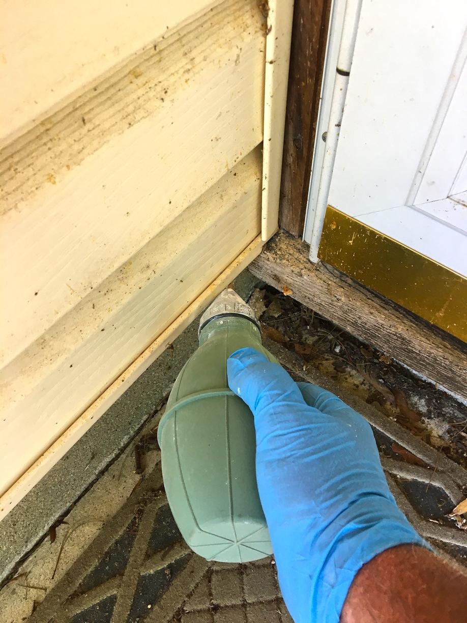 How to Eliminate Carpenter Ants