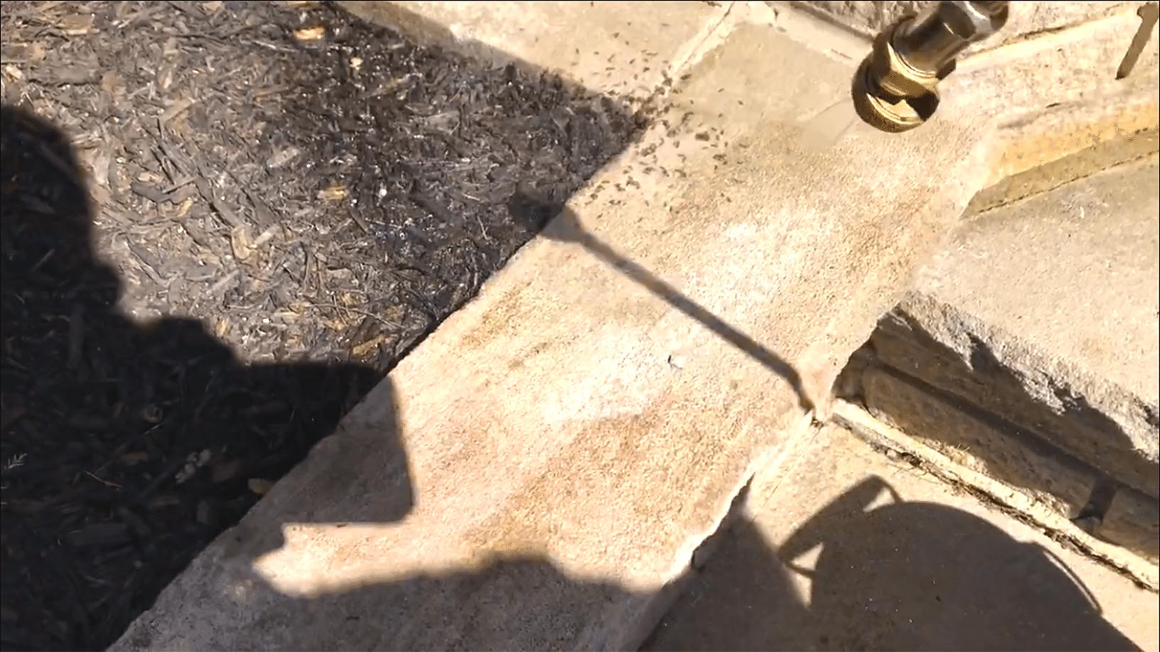 Pavement Ants Exterminated
