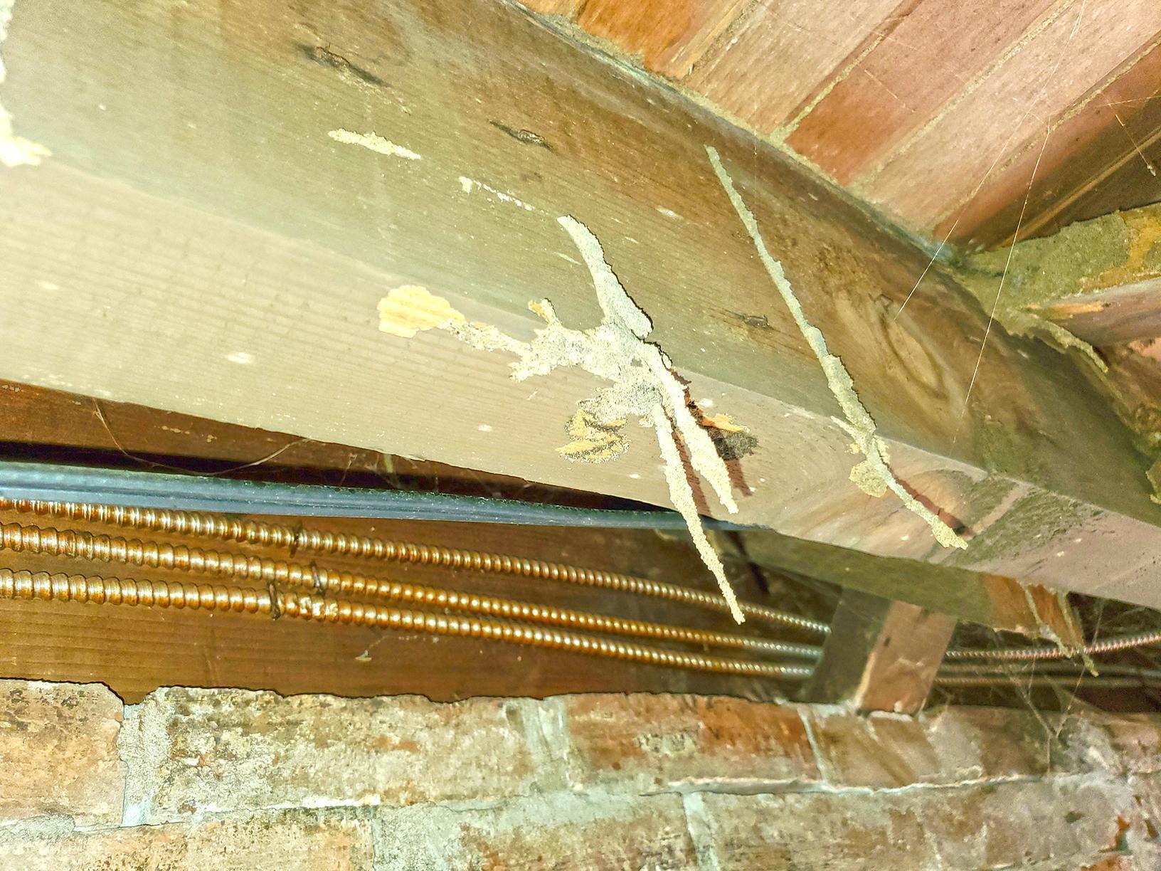 Exterminated Termites