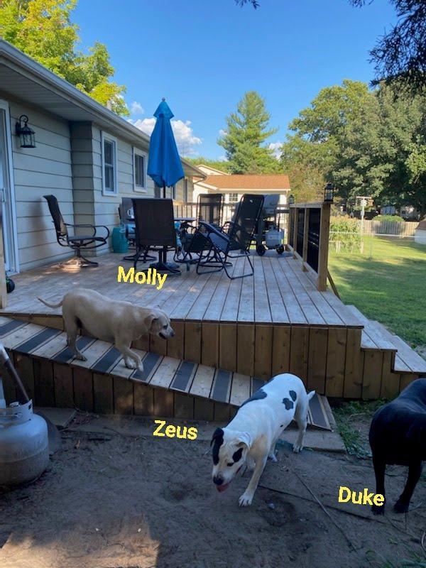 Deck with Ramp for the Doggies