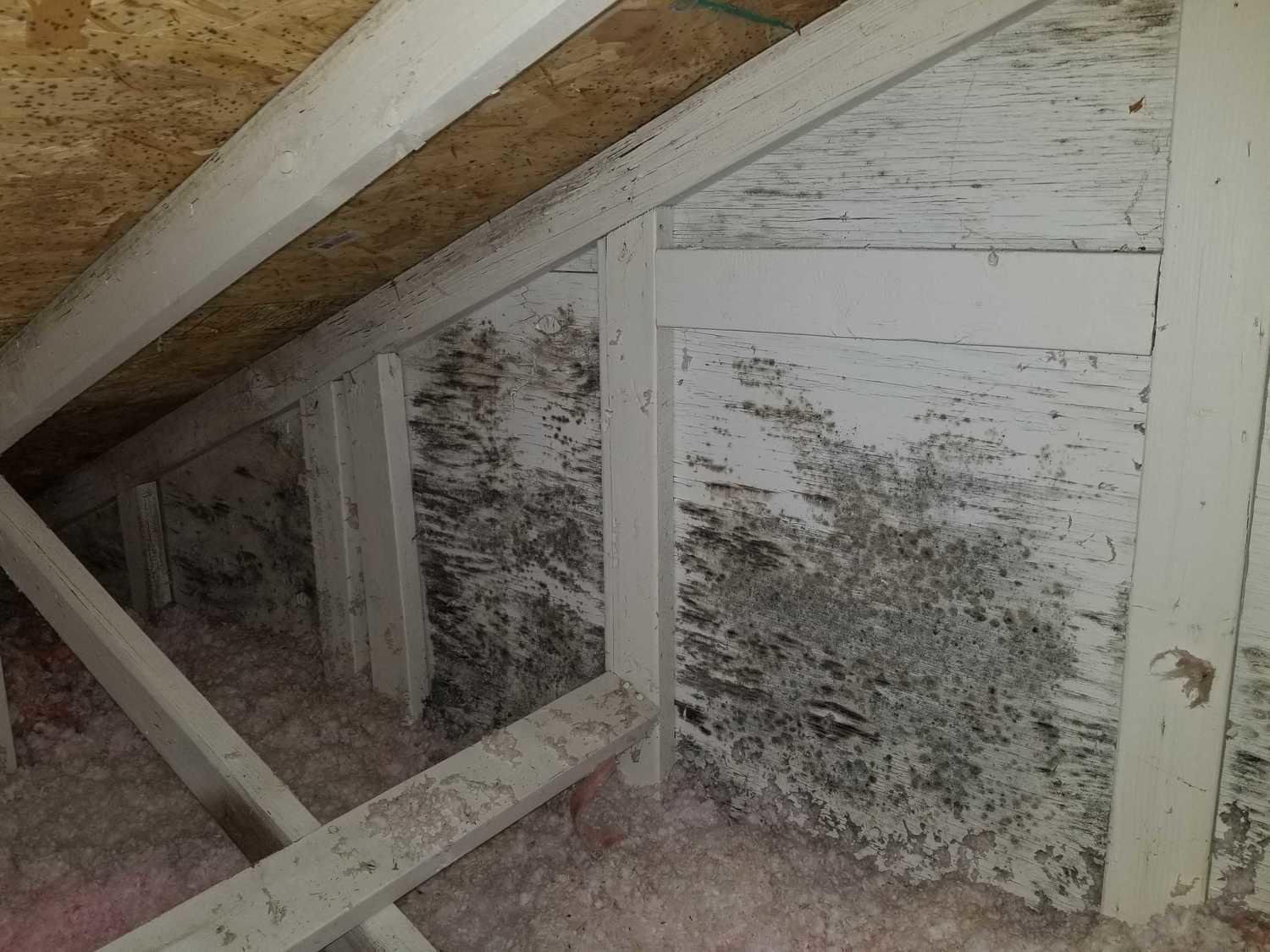 Mold showing on side wall
