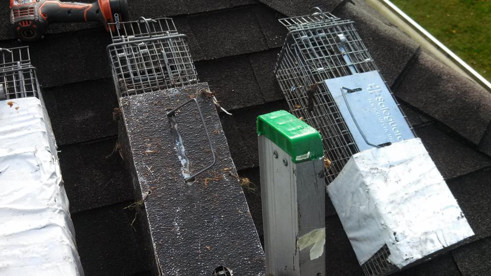 Variety of wildlife traps used in Toms River, NJ