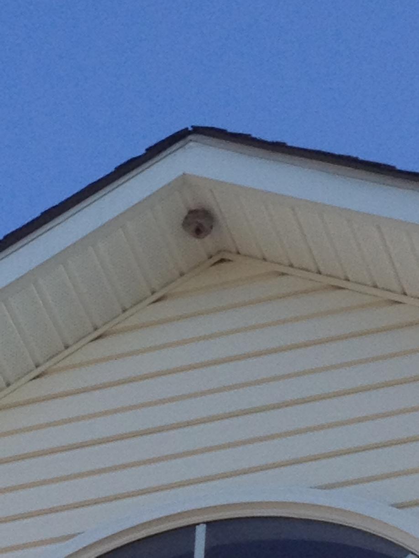 Hornet Nest in Home Eves in Howell, NJ