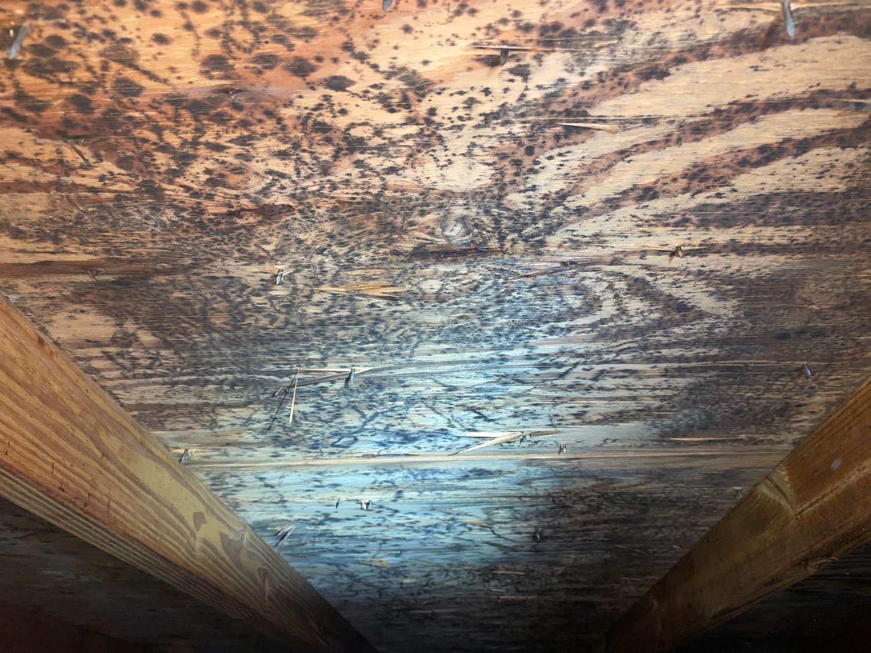 Mold on sheathing in attic