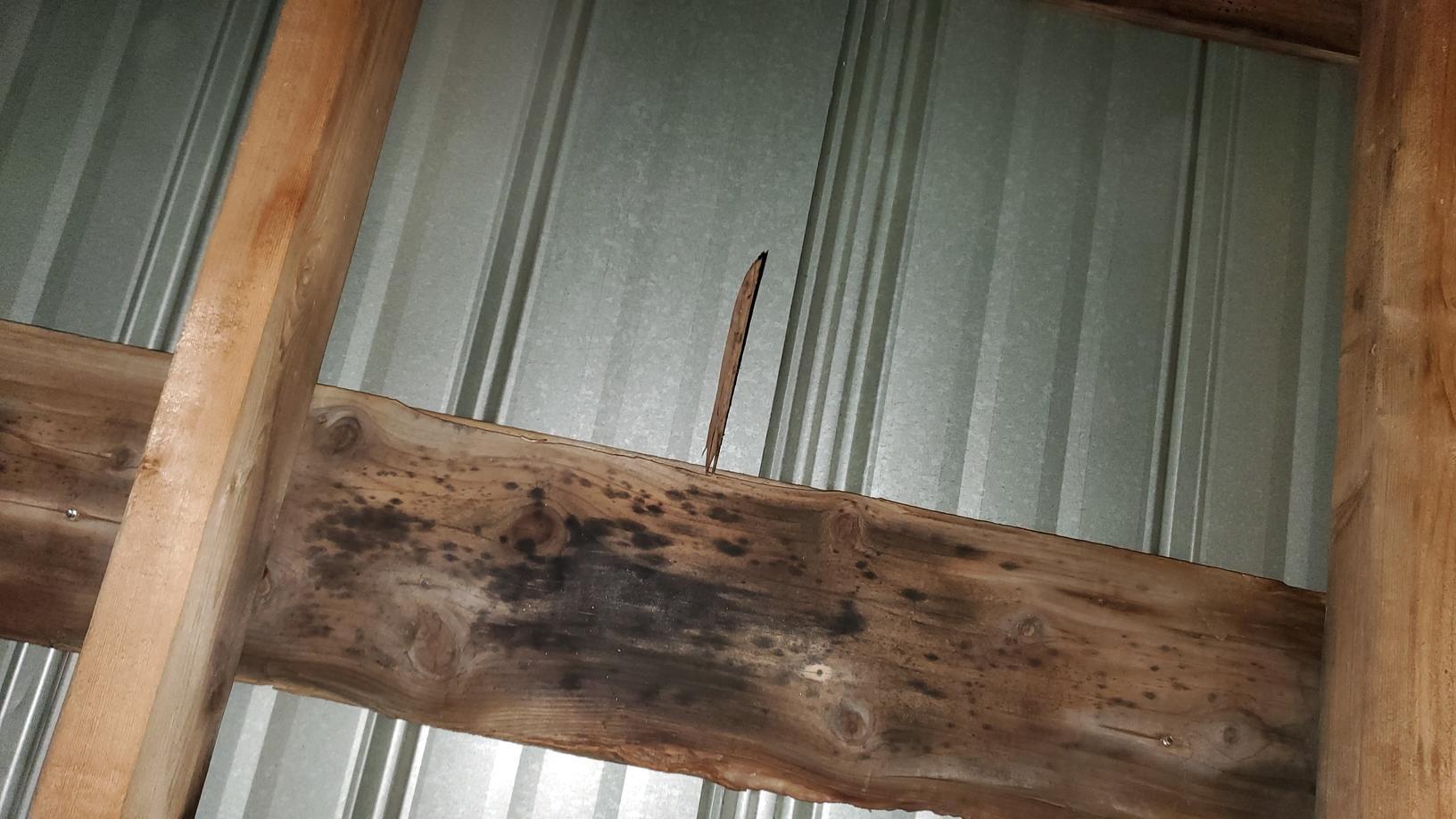 Moissisure sur le bois