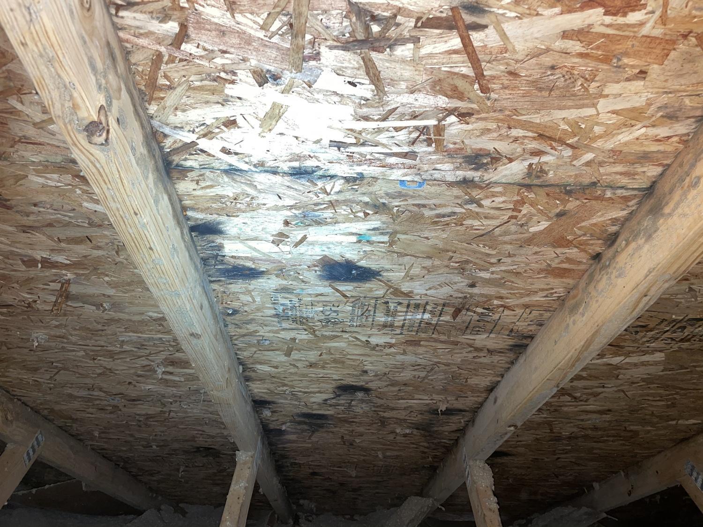 Mold on attic ceiling board