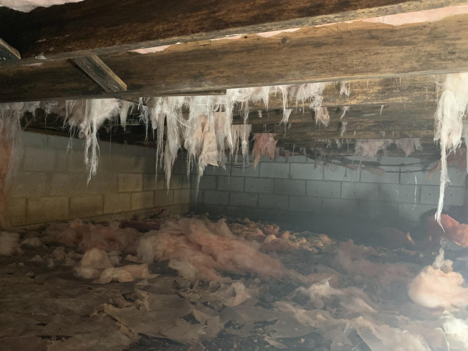 Wet crawlspace in need of clean up.