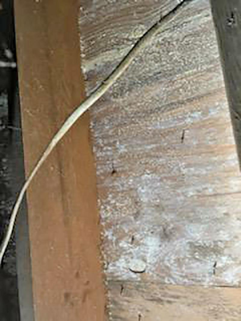 Severe Mold Growth